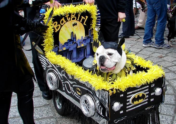 Krewe of Barkus Parade, one of the Must-See Mardi Gras Parades in New Orleans