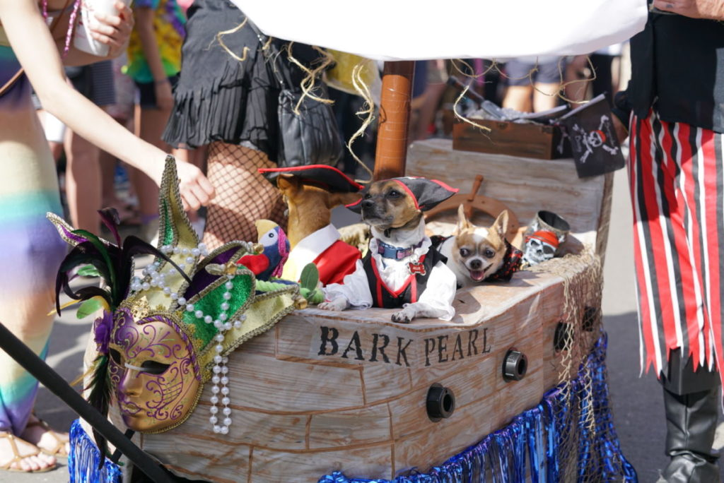 The Barkus Parade in New Orleans, one of the best ways to celebrate Mardi Gras in the French Quarter